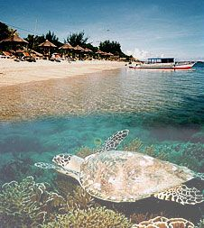 Gili Air island, off Lombok, Indonesia. No cars, incredible sea life, restaurants on beach in private huts