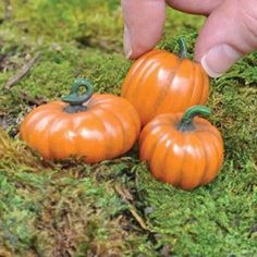 Miniature Pumpkins Set of 3