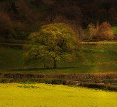 by Jem Salmon, via Flickr