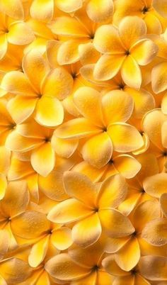 Yellow wallpaper iphone backgrounds nature 40 Ideas for 2019 Iphone Backgrounds Nature, Nature Iphone Wallpaper, Aesthetic Backgrounds, Wallpaper Backgrounds, Wallpaper Samsung, Wallpaper Ideas, Vintage Flower Backgrounds, Iphone Wallpaper Yellow, Aesthetic Drawings