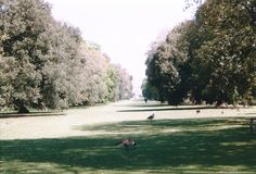 1999 Kew Garden Landscape