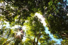 8/31(水)バリ島ウブドのお天気は晴れ。室内温度29.9℃、湿度64%。ここ数日気温が上がっています。夜もちょっぴり寝苦しい感じ。そんな時は森林浴で気分だけでも涼しげに~♪