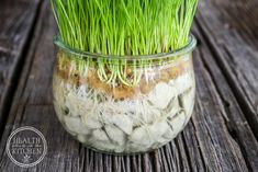 How to Grow Cat Grass Without Dirt One of the easiest ways you can keep your cat healthier is to offer them Cat Grass along with their food. I'm excited to share with you How to Grow Cat Grass without Dirt and why it's important. Benny And Joon, Chesire Cat, Cat Grass, Cat Hacks, Cat Garden, Garden Grass, Balcony Garden, Garden Plants, Outdoor Cats