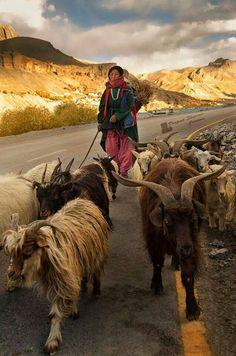 Tibet                                                       … …