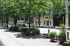 イメージ0 - 街並み6 街路樹&ベンチ @丸の内仲通り 7/13(月)の画像 - できる時だけの写真日記2 - Yahoo!ブログ