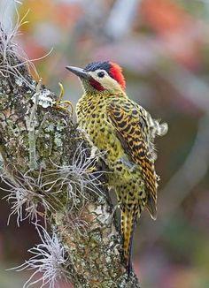 Imágenes+De+Aves+y+Pájaros+Para+Compartir+En+Facebook