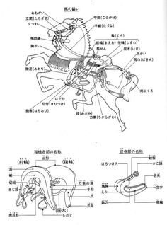 Japanese wood block print showing a samurai saddle (kura) and all the related equipment.