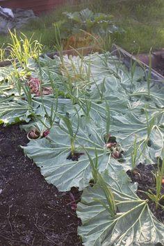 Pin on garden Potager Garden, Veg Garden, Vegetable Garden Design, Garden Edging, Edible Garden, Garden Landscaping, Garden Paths, Farm Gardens, Outdoor Gardens