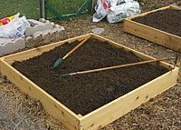 Raised bed gardening doesn't have to be expensive! Here's a cheap, fast method for productive plants!