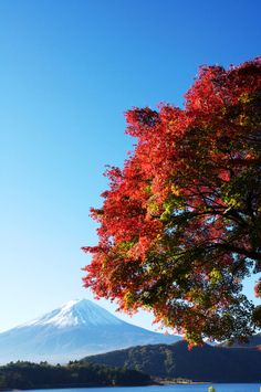 Autumnal leaves and Mt. FUJI by Tsuguharu Hosoya on 500px