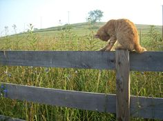 Every Farm needs an orange cat!!  Mine was named Tommy Toes!