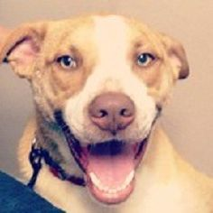 """""""Frank the Tank"""" living his final days surrounded by a loving family and being able to just run and play."""