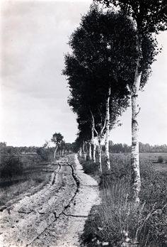 Georg Tappert: Sandweg nach Worpswede (Sandy way to Worpswede), um 1906/1909, Barkenhoff-Stiftung Worpswede