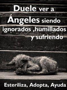 Sufro cada que veo un perrito así !! . Apoyemos a los perritos de la calle, son unos angelitos!