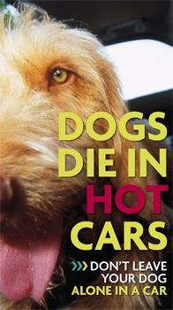 To all you people out there who have to be told lol:  Dogs die in hot cars - keep your eyes open for any dogs you might see left in cars and call 911.  Hell, I'd even break the window myself and not wait for the police to do it...