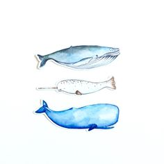 Watercolor Whale Stickers
