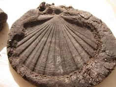 Coffee Ground Fossils - Mix 1 c. used coffee grounds, 1/2 c. water, 1 c. flour and 1/2 c. salt together in a large bowl. Make imprint using shells, leaves, etc.. Allow to dry overnight.