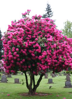 Located at a Cemetery in Vancouver, Washington