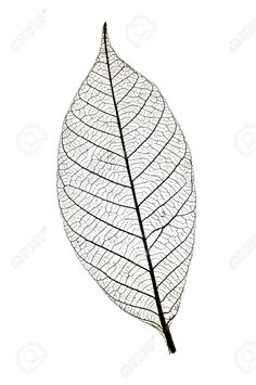 leaf skeleton - Google Search