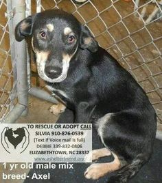SUPER URGENT: EUTH LIST FOR WED 9/2. Too many pets came in over holiday...NEED RESCUE OR ADOPTION (COMMITMENT) NOW!!!