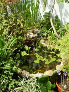 El  viejo estanque en la terraza