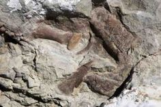 New tyrannosaur fossil is most complete found in Southwestern US #Geology #GeologyPage
