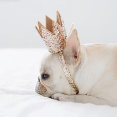 French Bulldog in a Crown❤❤