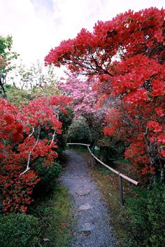 tunnel of the red blossom