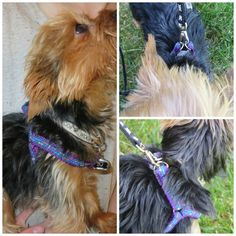 DIY Step in Dog Harness Materials needed: 2 yards of nylon webbing 2 yards of coordinating ribbon (jacquard or grosgrain work best, and this is OPTIONAL) Hardware: Note: You NEED to customize the h… Dog Safety, Dog Jacket, Sleeping Dogs, Collar And Leash, Pet Collars, Animal Crafts, Dog Coats, Dog Harness, Dog Owners