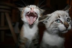 That awkward moment when your drunk friend starts to sing... #cats