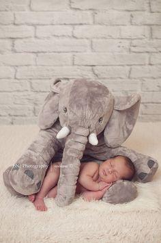Elephant newborn pho