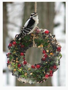 Bird Christmas