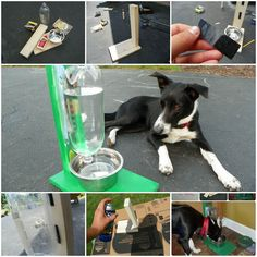 DIY Easy Water Bowl for Dogs and Cats