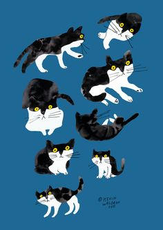 CAT ART - black & white (kevin waldron)