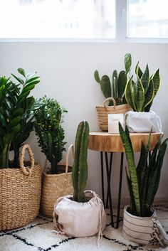 3 PLanter Ideas (When You're Too Lazy to Repot-2