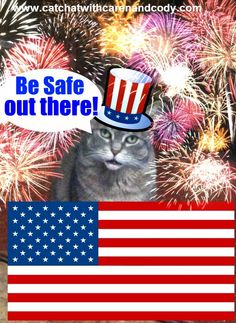 CAT CHAT: Have a Happy and Safe 4th!!