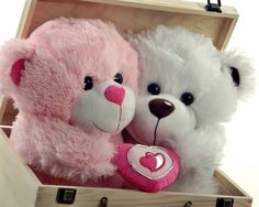 Cut Love Teddy in pink and white