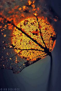 Sun rising behind a leaf.