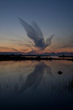 sky bird by villi ólafs on Flickr.