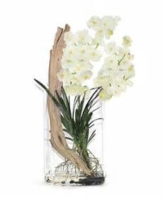 24 Vanda Orchids Ideas Orchids Vanda Orchids Orchid Arrangements