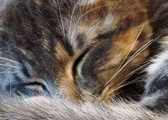 sleeping kitty...