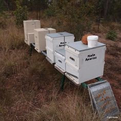 Eight Acres: Things to consider before you get bees