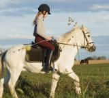 Horse Training Methods and How to Safely Train Your Horse