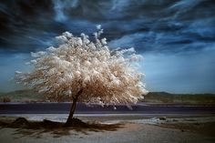 Tree Photography Inspiration: 39 Beautiful Examples - The Photo Argus Classic Photography, Tree Photography, Landscape Photography, Pretty Pictures, Cool Photos, Amazing Photos, Bonsai, Infrared Photography, Photo Tree