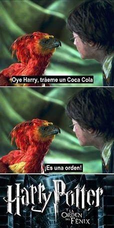 Al fin sabemos el origen del quinto libro. | 18 Memes de Harry Potter tan chistosos que hasta harán reír a Voldemort