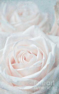 Vintage Roses - Iris Lehnhardt