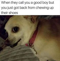 20 Funny Animal Memes To Get You Ready For The Weekend