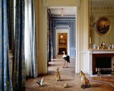 Karen Knorr at Danziger Gallery, on view until May... | Art Ruby