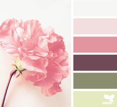 Design Seeds celebrate colors found in nature and the aesthetic of purposeful living. Colour Pallette, Color Palate, Colour Schemes, Color Combos, Color Patterns, Pantone, Rosa Vintage, Design Seeds, Colour Board