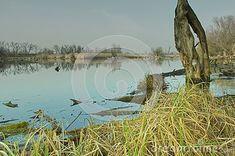 floodplain-forest-diversity-diverse-species-plants-animals-district-komárno Diversity, Plants, Animals, Animales, Animaux, Animal, Plant, Animais, Planets